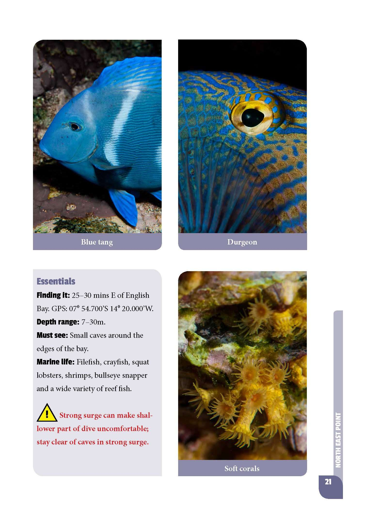 Sample page from Diving and Snorkelling Ascension Island