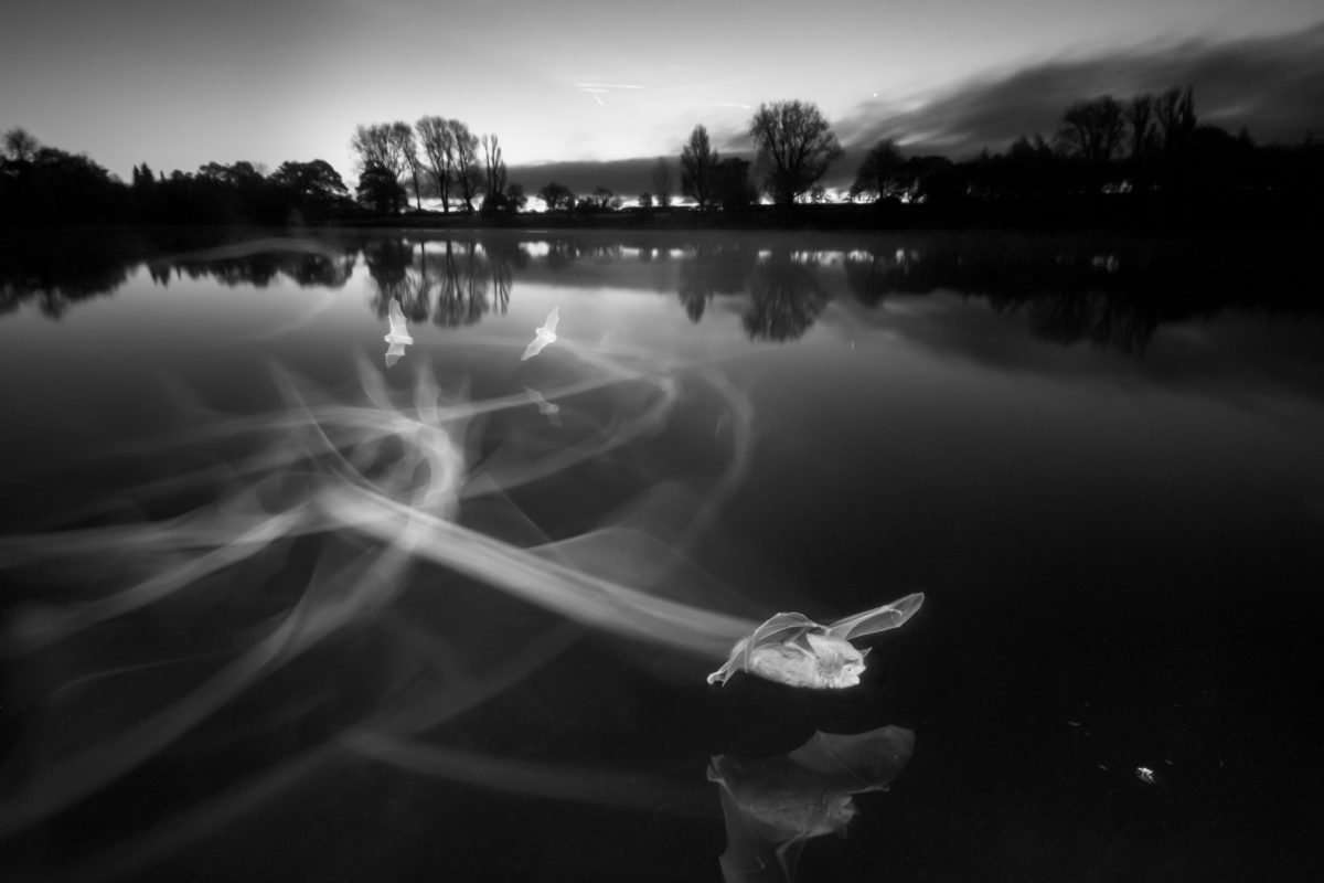 Infra-red photograph of bats at dawn